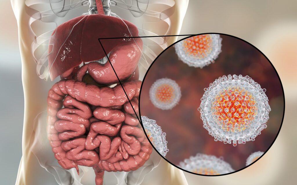 hepatit virüsü