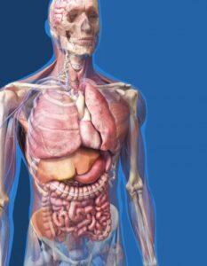 anatomi testleri