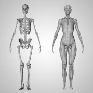 anatomi ders notları